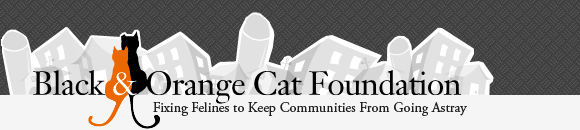 Black and Orange Cat Foundation